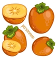 Persimmon Isolated vector image