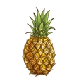 Pineapple exotci tropical fruit isolated sketch vector image vector image
