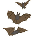 three bats set vector image