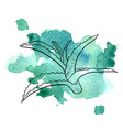 aloe at watercolor background vector image vector image