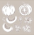 botanical set with isolated pumpkins flowers and vector image