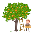 Boy picking oranges vector image