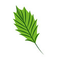 green leaf nature on white background vector image
