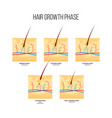 human hair growth phase scheme flat style vector image