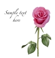 Pink rose isolated on white background vector image vector image