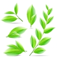set of a collage of green tea leaves vector image vector image