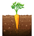 Carrot with root underground vector image