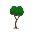 green tree on a white vector image vector image
