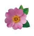 dog rose hip vector image