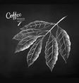 chalk drawn sketch coffee branch vector image vector image