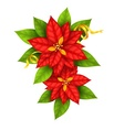 Christmas Star flowers vector image vector image