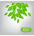 eco leves background vector image vector image