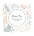 herbal tea banner template with space for text vector image vector image