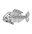 piranha fish skeleton engraving vector image
