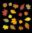 set of colorful autumn leaves design elements vector image