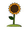 beautiful sunflower symbol vector image