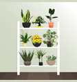 collection of houseplants flat style vector image vector image