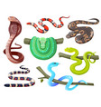 snakes wild tropical serpents cobra and python vector image