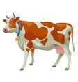 Brown and white cow side view isolated vector image vector image
