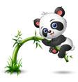 cute baby panda tree climbing bamboo vector image vector image