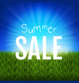summer sale with green grass vector image vector image
