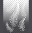 white feathers set of graphic design elements vector image