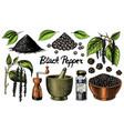 black pepper set in vintage style mortar vector image vector image