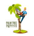 Palm tree service professional man