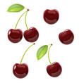 realistic detailed ripe red berry cherry vector image