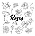 set black and white outline roses buds vector image