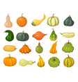 squash collections organic natural healthy food vector image