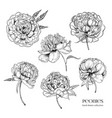 beautiful peonies set hand drawn detailed blossom vector image vector image