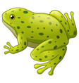green spotted frog isolated vector image
