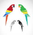 image a parrot vector image vector image