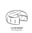 outline camembert cheese vector image