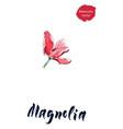 flower magnolia watercolor vector image vector image