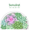 card with various succulents in pot echeveria vector image vector image