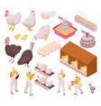 chicken production icon set vector image