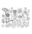 hand drawn botacal floral design elements vector image vector image