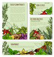 templates set for spices and herbs market vector image vector image
