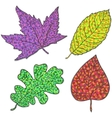 Collection beautiful colorful autumn leaves vector image