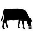 Grazing cow vector image vector image