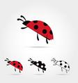 llustration of the ladybu vector image vector image
