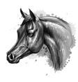portrait an arab horse graphic monochrome vector image vector image
