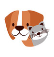 dog and cat pet on white background vector image vector image