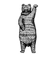 grizzly bear stands on two paws brown wild vector image vector image