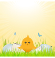 easter chick with broken egg vector image vector image