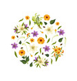 beautiful flowers round shape decorative vector image vector image