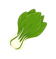 fresh green salad vector image vector image