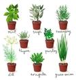 herbs in pots vector image vector image